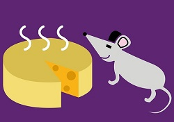 עכבר עם גבינה