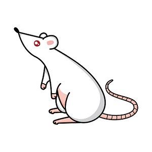 הדברה אקולוגית – מה לגבי עכברים?